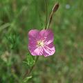 Photos: flower05252011dp2-03