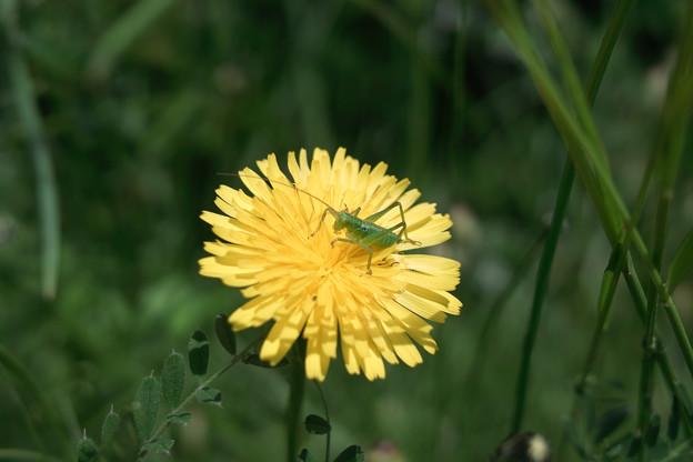 Photos: Flower_and_bug05252011dp2-02