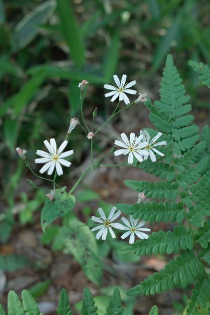 Photos: flower06132011dp2-04