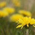 Photos: 普通の春