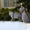 Photos: 猫一家