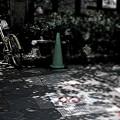 Photos: 路上喫煙禁止地区.......