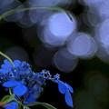 "Photos: ""Japan Blue""......."
