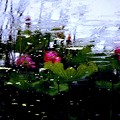 雨音........