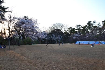 広場の桜@清水公園[4/8]