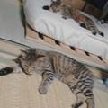 写真: 奥ちゃんがタップリ遊んであげたらしく、同じポーズで寝落ち中w。やっぱ姉弟だねえ。