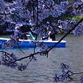 写真: お花見ボート 01