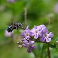 幸せを呼ぶ青いミツバチ
