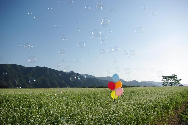 蕎麦畑の地平線