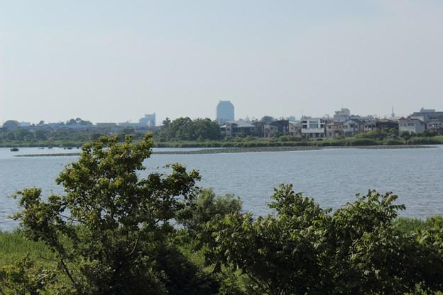 鳥見庵から望む新潟県庁