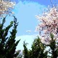 写真: 桜と飛行船-02