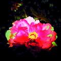 Photos: 紅い花-01b