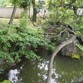 Photos: 旧安田庭園