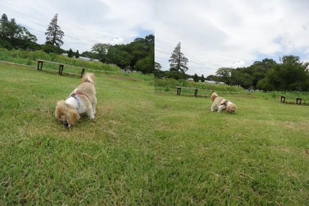 芝生とわんこ2