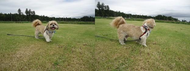 芝生とわんこ3