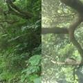 写真: ハートの枝
