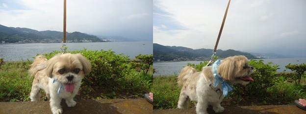 写真: 海とわんこ