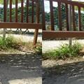 写真: ワンパラドッグランベンチ