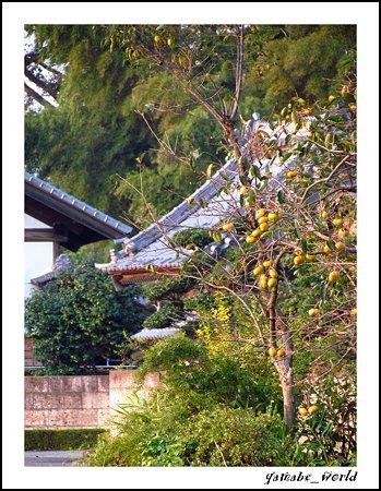 里の… いや、僕の住む部落の柿の木だ^ ^