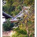 Photos: 里の… いや、僕の住む部落の柿の木だ^ ^