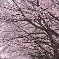 花は桜木・・・