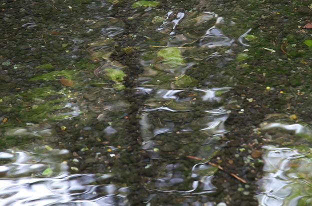 枯れ池も潤って