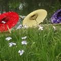 徳川庭園~菖蒲