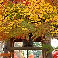 Photos: 紅葉・平林寺6