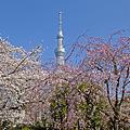 Photos: 桜とスカイツリー2
