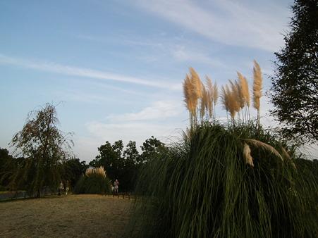 昭和記念公園 740