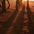 伸びる影 沈む夕日