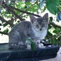 Photos: はいしろ子猫さん