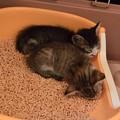 Photos: トイレでネコ団子
