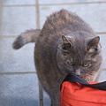 Photos: 麻薬検知猫みたい・・・