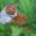 mokren-cat