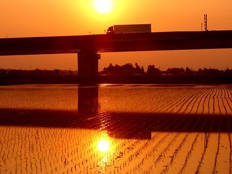 夕陽・田んぼ・橋