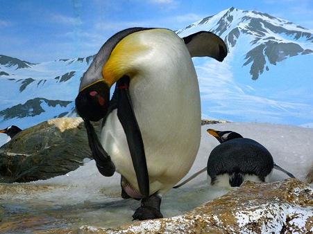 20111223 鴨川 ペンギン音頭01