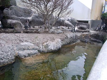 20111223 鴨川 ごくらくふんぼ03