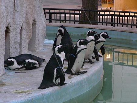 20110812 上野 真夏の夜のペンギン01