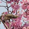 写真: 春を啄む