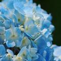 晴れ間に咲く青2