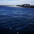 Photos: 青い港