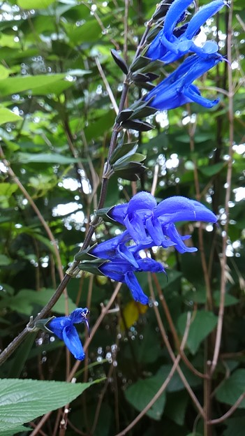 Photos: 鳥のくちばしに似た花