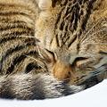 写真: 居眠り