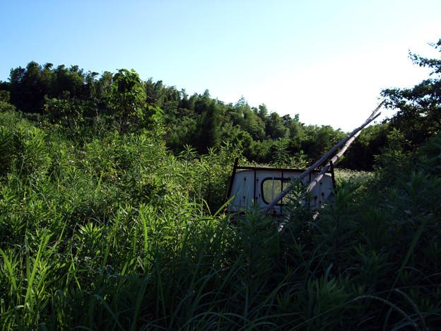 茂みの中の軽トラ