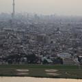 Photos: 江戸川とスカイツリー