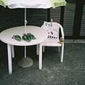 Photos: 100円