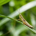 写真: yamanao999_insect2015_218