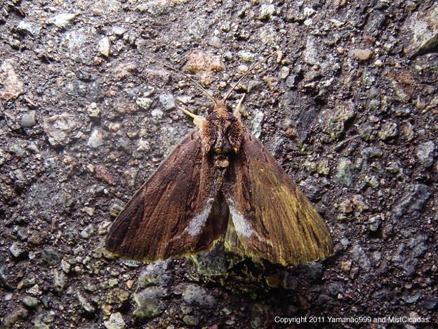 写真: yamanao999_insect2011_314