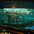 Photos: 富士湧水の里水族館 二重回遊水槽